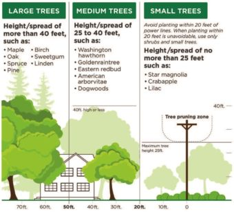 Illustration of Tree types by height. Large Trees: height/spread of more than 40 ft, such as: maple, oak, spruce, pine, birch, sweetgum, linden. Medium Trees: height/spread of 25 to 40 ft, such as: Washington hawthorn, goldenraintree, eastern redbud, American arborvitae, dogwoods. Small Trees: height/spread of no more than 25ft, such as: star magnolia, crabapple, lilac. Avoid planting within 20ft of power lines. When planting within 20 ft is unavoidable, use only shrubs and small trees.