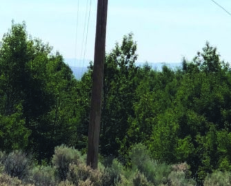 WREC poles and power lines