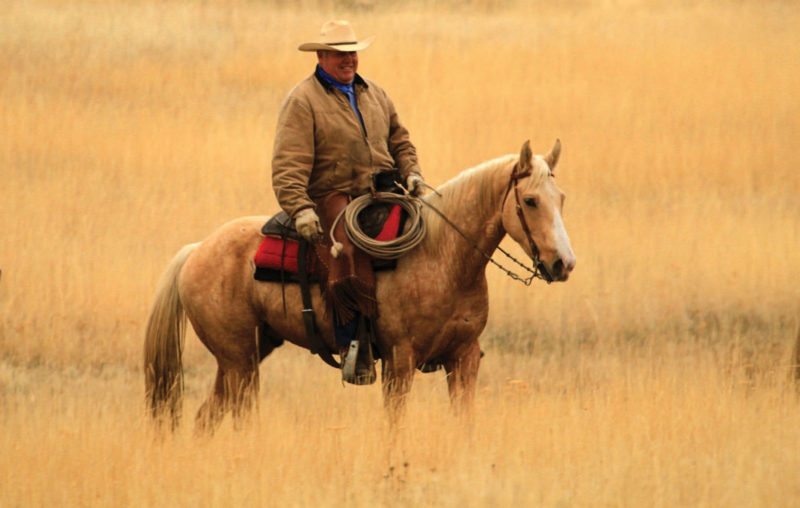 Man riding a horse in a field
