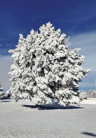 tree covered in ice